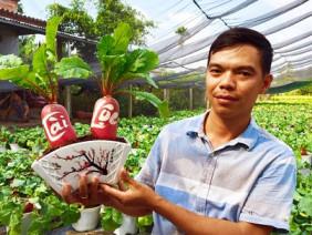 Đang gây sốt ngỡ ngàng: Củ cải Hồng Phát bonsai chưng Tết 2019