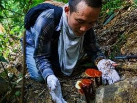 """Bí thư Quảng Nam: Đưa nấm lim xanh, nấm linh chi ra """"chợ"""" thế giới"""