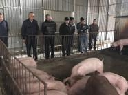 Thông tin mới về dịch tả lợn châu Phi: Không phát sinh thêm ổ dịch