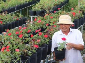 Sa Đéc-Hơn 300 năm chung tình với nghề trồng hoa hồng
