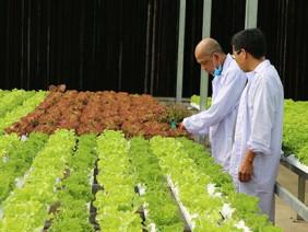 Ngỡ ngàng với vườn rau siêu sạch giữa lòng Sài Gòn chuẩn Global GAP