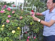 Từ đam mê hoa hồng đến ông chủ vườn hồng bạc tỷ