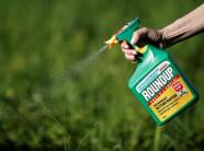 Tiếp tục tranh cãi việc dừng sử dụng thuốc trừ cỏ chứa Glyphosate