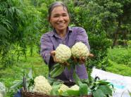 """Cả làng trồng quả """"mở mắt"""" thu gần 100 tỷ đồng mỗi năm"""