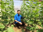 Kỹ sư về quê trồng dưa lê Hàn Quốc, bỏ túi hàng trăm triệu