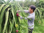 nông sản làng nghề, tiêu thụ nông sản, quảng bá các sản phẩm nông sản, tiêu thụ nông sản, nông dân