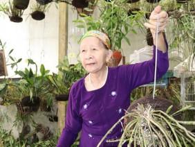 """""""Lão bà bà"""" 81 tuổi làm vườn lan tiền tỷ """"khủng"""" nhất tỉnh Lai Châu"""