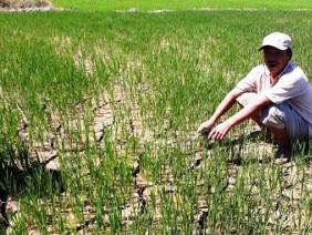 """Thừa Thiên - Huế: Hàng trăm héc ta lúa """"thoi thóp"""""""