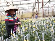 10 năm miệt mài xây dựng NTM: Lâm Đồng ngày càng khởi sắc