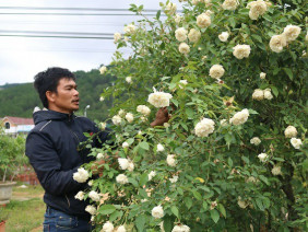 Chàng trai sở hữu vườn hoa hồng có chậu bán đến 150 triệu đồng