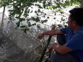 Hà Tĩnh: Nuôi ếch vừa nhàn lại cho thu nhập 30 triệu đồng mỗi lứa