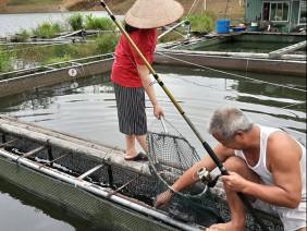 LẠ: Nuôi cá khủng trong lồng ở đập Hồ Ly, ngửi cá sống mà ít tanh?