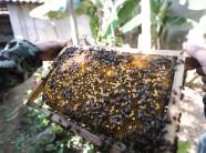 Nghệ An: Phát tài nhờ nuôi loài ngày bay đêm ngủ làm đủ mật ngon