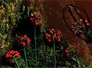 Thứ hạt đỏ đẹp mê hoặc ví như ngọc trời trên đỉnh Ngọc Linh