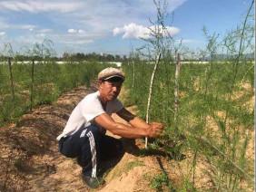 """Quảng Nam: Giữa cát nắng chang chang, trồng cây lạ ra """"rau vua"""""""
