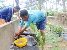 Lời cả trăm triệu nhờ 19 bể xi măng nuôi ép lươn đồng đẻ trứng