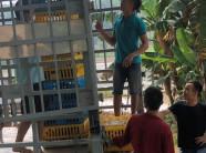 Phú Thọ: Sẽ trao lại 5.700 gà cho dân sau vụ
