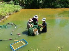 Đà Nẵng: Muốn giàu nuôi cá, muốn khá dân ở đây cũng nuôi cá