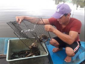 Cà Mau: Nuôi loài cua to bự, sau 5 năm, trai nghèo thành tỷ phú