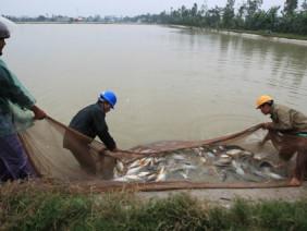 Xử lí ao nuôi thủy sản: Giải bài toán khó nhờ chế phẩm sinh học