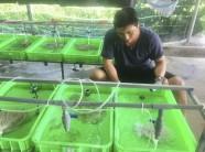 Cầm bằng kỹ sư cơ khí về quê nuôi lươn lót bạt, anh Phát phát tài