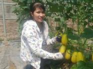 Nam Định: Bỏ việc ở phố, hotgirl về quê trồng dưa làm giàu