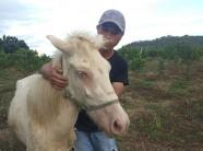 Gia Lai: Đàn ngựa mắt đỏ hàng tỷ đồng trên 'ốc đảo' của trai 8X