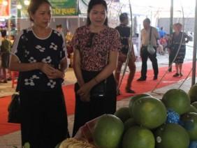 Bắc Giang: Hái bưởi da xanh đúng mùa cưới, giá cứ tăng theo tuần