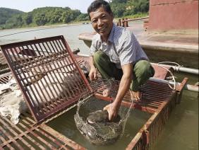 Nuôi loài cá 'chúa tể dòng sông' dân thu hàng trăm triệu đồng/năm