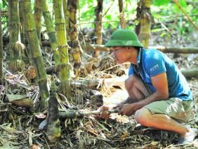 Đi dọc sông Hương 'săn' thứ măng tre vàng, có vài trăm ngàn/ngày