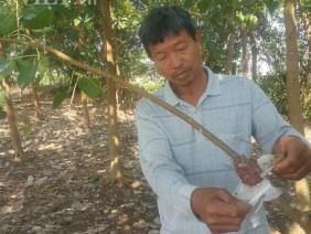 LẠ MÀ HAY: Trồng cây giác ngộ, bỏ túi hàng trăm triệu đồng/năm