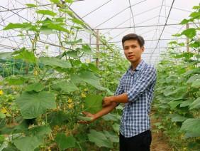 Nghệ An: Cất bằng kỹ sư xây dựng, 9X về trồng rau đẹp như tranh