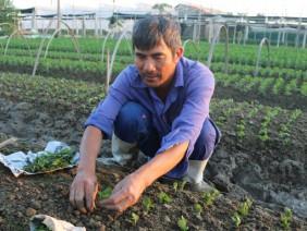 Thanh Hóa: Ở đây dân trồng bầu canh, rau an toàn chỉ lo 'cháy hàng'