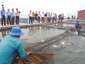 """""""Đánh thức"""" tiềm năng nuôi cá nước ngọt ở miền Bắc"""