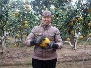 Chuyển giao kỹ thuật, trợ giúp nông dân làm thương hiệu nông sản