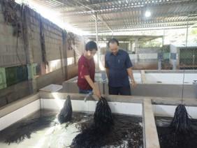 Thả lươn vào bể xi măng, cho ăn trùn quế và cám gạo, bán đắt hàng