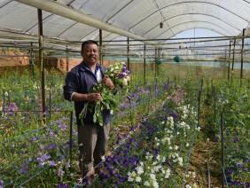 Đà Lạt: Một nông dân lời 5 tỷ đồng mỗi năm từ 5ha trồng đủ thứ hoa
