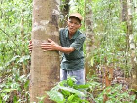 Lão nông để tiền tỷ... trong rừng
