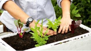 Cách trồng rau sạch trong thùng xốp cực tiện dụng - 4