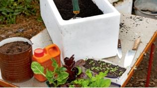 Cách trồng rau sạch trong thùng xốp cực tiện dụng - 2