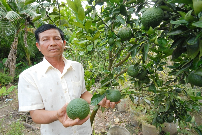 Bí quyết bón phân cho cây ăn quả hạn chế sâu bệnh hại 4