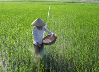 Sản suất khoa học - nông dân thu lợi nhuận với vụ mùa bội thu2