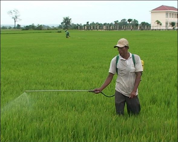 Sản suất khoa học - nông dân thu lợi nhuận với vụ mùa bội thu4