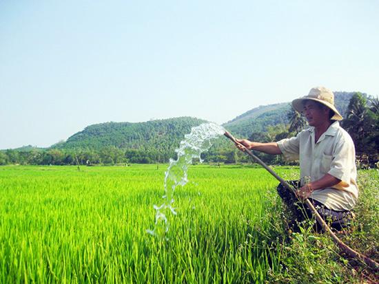 Sản suất khoa học - nông dân thu lợi nhuận với vụ mùa bội thu3