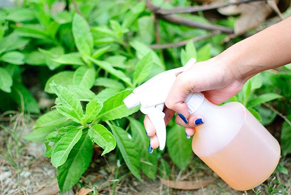 Sử dụng phân bón an toàn khi trồng rau sạch tại nhà6