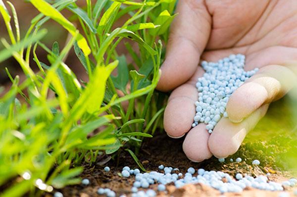 Sử dụng phân bón an toàn khi trồng rau sạch tại nhà4