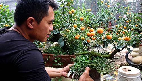 tỉa cành cây ăn quả trồng chậu