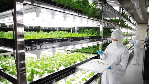 nông nghiệp công nghệ cao ở nhật bản