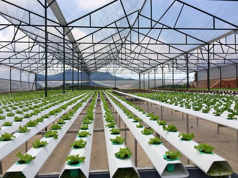 nông nghiệp công nghệ cao