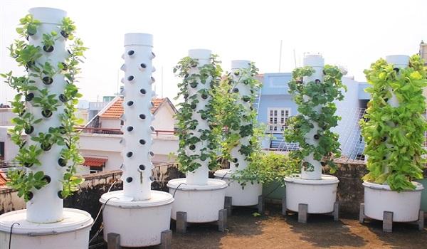 trồng rau khí canh ứng dụng công nghệ cao